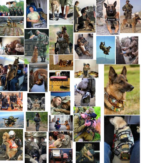 170310.war.dog.heroes.70pc.jpg