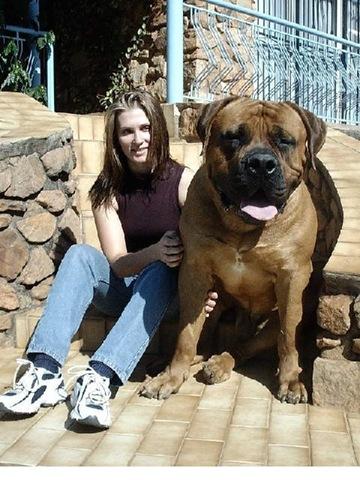 dog_big_anti_crime_mage001.jpg